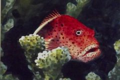 Strawberry Grouper