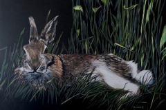 Staiger_Bivenne_Rabbit-in-Repose_Scraperboard.Watercolor_16x20_900