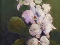 Lynch Favorite Flowers oil