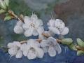 Reichenbach Apricot Blossoms watercolor