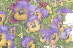 Barry_Betsy_PottedPansies_coloredpencil_16x20_800