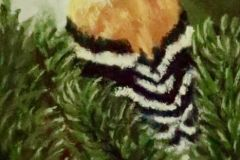 Frieswick_Carol_Gold-Finch_pastel_5x7_125