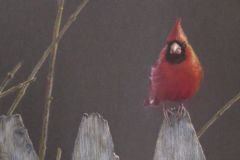Prentice_Jan_Northern-Cardinal-I_Colored-Pencil_9X12_675