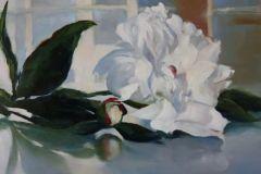 Robertson_Janine_White-Peony_oil-on-aluminum_13x15_600