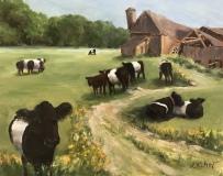 """Randie Kahrl, """"Galloway Gals"""", oil, 11x14, $795"""
