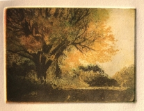 """Nina Ritson, """"Tree on Day Street"""", Etching, 2x3, Sold"""