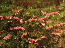 """Wesley Vietzke, """"Bleeding hearts at Florence Griswold"""", oil, 18x24, $500"""