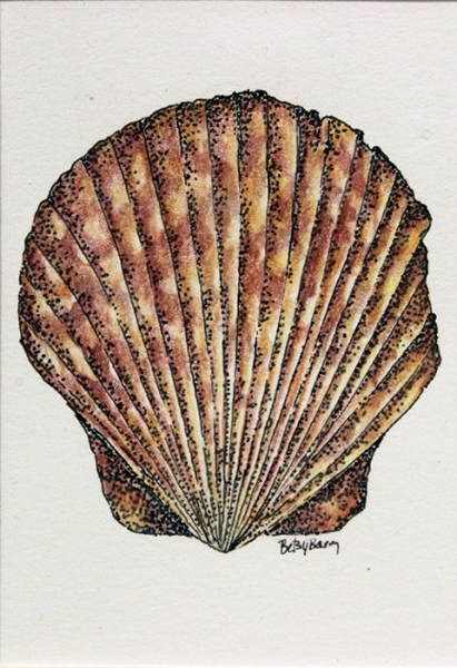 Barry Betsy Single Scallop