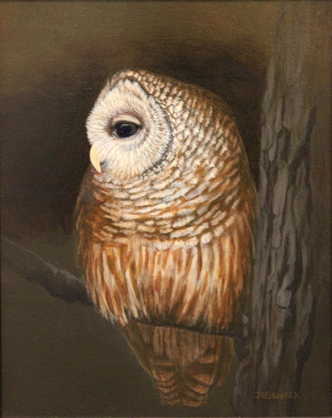 Senack J Elaine Night Owl Barred Owl