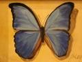 Baldino Patt Blue Butterfly