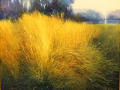 Robertson Janine Grasses and Light