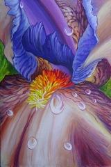 "Barry Seelig, ""Iris Fantasy"", acrylic, 24x36, $2,200"