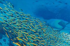 BarrLauraOceanElegy20oiloncanvas
