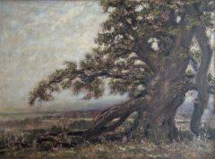 "Alexander Anisimov, ""Granby Oak"", oil, 26x35, $725"
