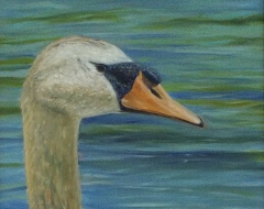 "Daniel Dahlstrom, ""Portrait of a Swan"", oil, 16x20, $850"
