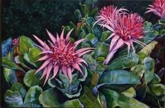 """Jill Beecher Matthew, """"Blooming Bromeliads"""", oil, 24x36, $2,100"""
