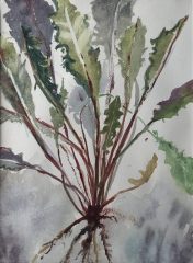 "Joan McPherson, ""Dandelion"", watercolor, 21x17, $350"