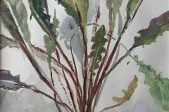 "Joan McPherson, ""Dandelion"", watercolor, 21x17, $350"