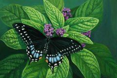 """J Elaine Senack, """"Black Swallowtail Butterfly"""", acrylic, 12x16, $850"""
