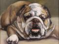 Baldino Patt Bull Dog