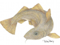 Barry Betsy Cod