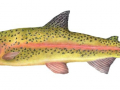 Barry Betsy Salmon