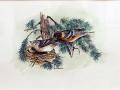Boone Jim Bay Breasted Warblers