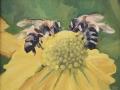 Centrella Michael Grays Bees