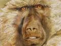 Chapin JoAnna The Golden Baboon