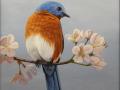 Senack J Elaine Bluebird and Cherry Blossoms
