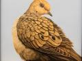 Senack J Elaine Mourning Dove