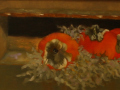 Carol Frieswick, <i>Persimmons, </i>oil, $225