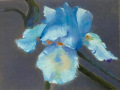 Kathy Kuryla, <i>Bearded Iris, </i>pastel, $325