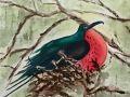 Sharol Stewart, <i>Male Frigate Bird, </i>watercolor, $250