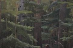 edereileencathedraltrees