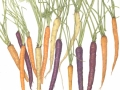 Betsy  Barry	, <i>	Rainbow Carrots	</i>, 	colored pencil	,	$800