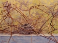 Jill Beecher Matthew	, <i>	Nest in the Kiwi Vines	</i>, 	oil	,	$1,150